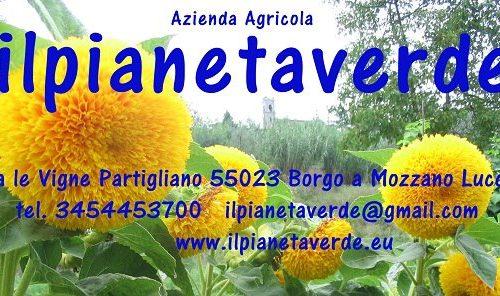 Benvenuto su il blog  ilpianetaverde