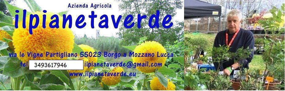 ilpianetaverde blog