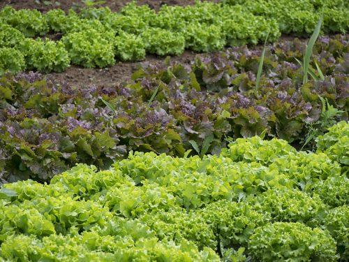 Calendario delle semine dell'orto