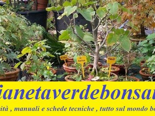La foto del vostro bonsai come immagine in evidenza sul nostro blog
