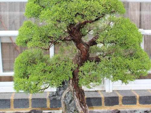 Calendario Bonsai Ottobre