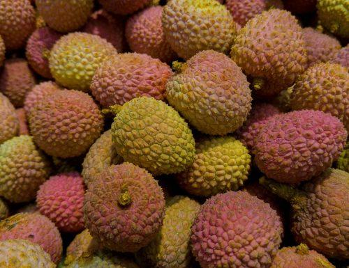 Litchi dal frutto alla pianta in pochi giorni