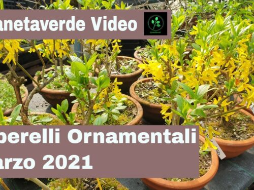 Alberelli Ornamentali Marzo 2021
