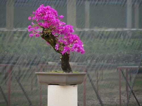 Calendario Bonsai Aprile