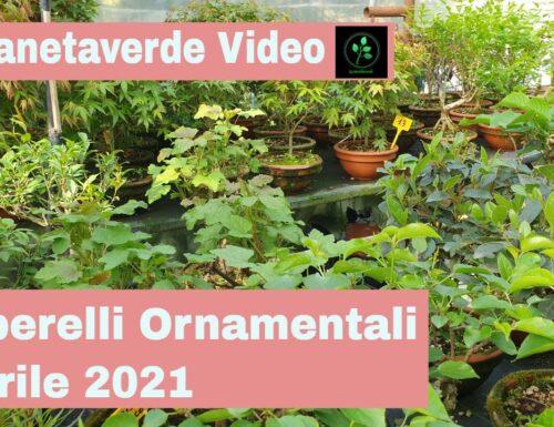 Alberelli Ornamentali Aprile 2021
